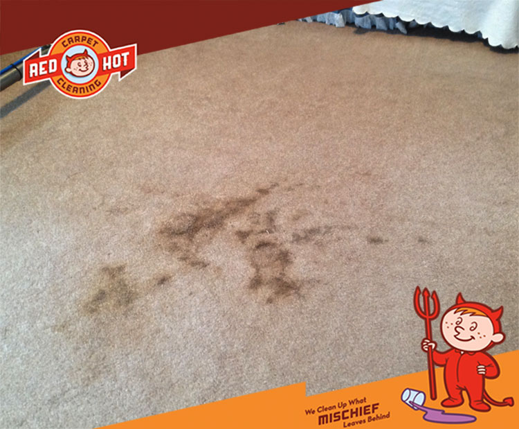Photo Gallery Red Hot Carpet Cleaning Before And After